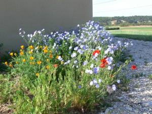 La Provence en fleurs
